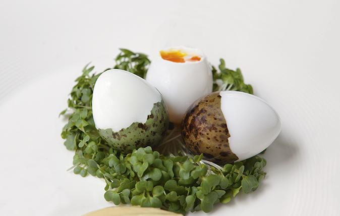 Black-headed gulls' eggs.