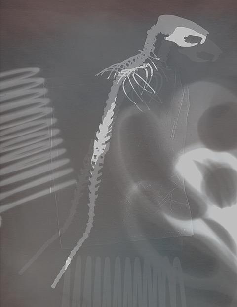 rat_skeleton_2_ver_fs.jpeg