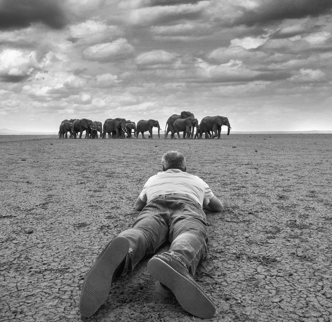 David Yarrow Photography -    link