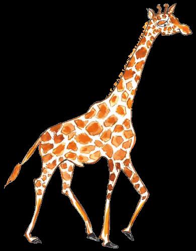 ks-giraffe-500px.png