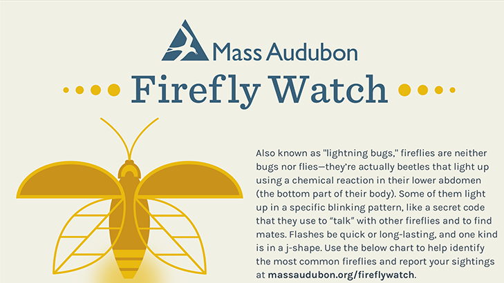 firefly-flashes-id-infographic-750.png