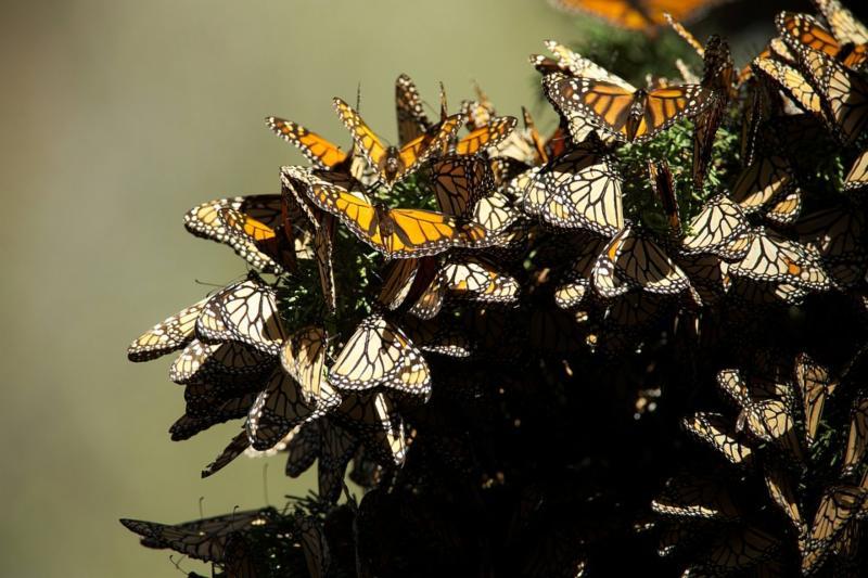 butterflies-807551_960_720.jpg