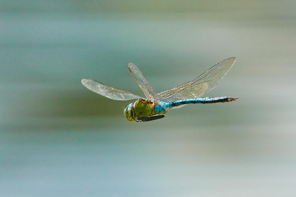 dragonfly-3736197_960_720.jpg