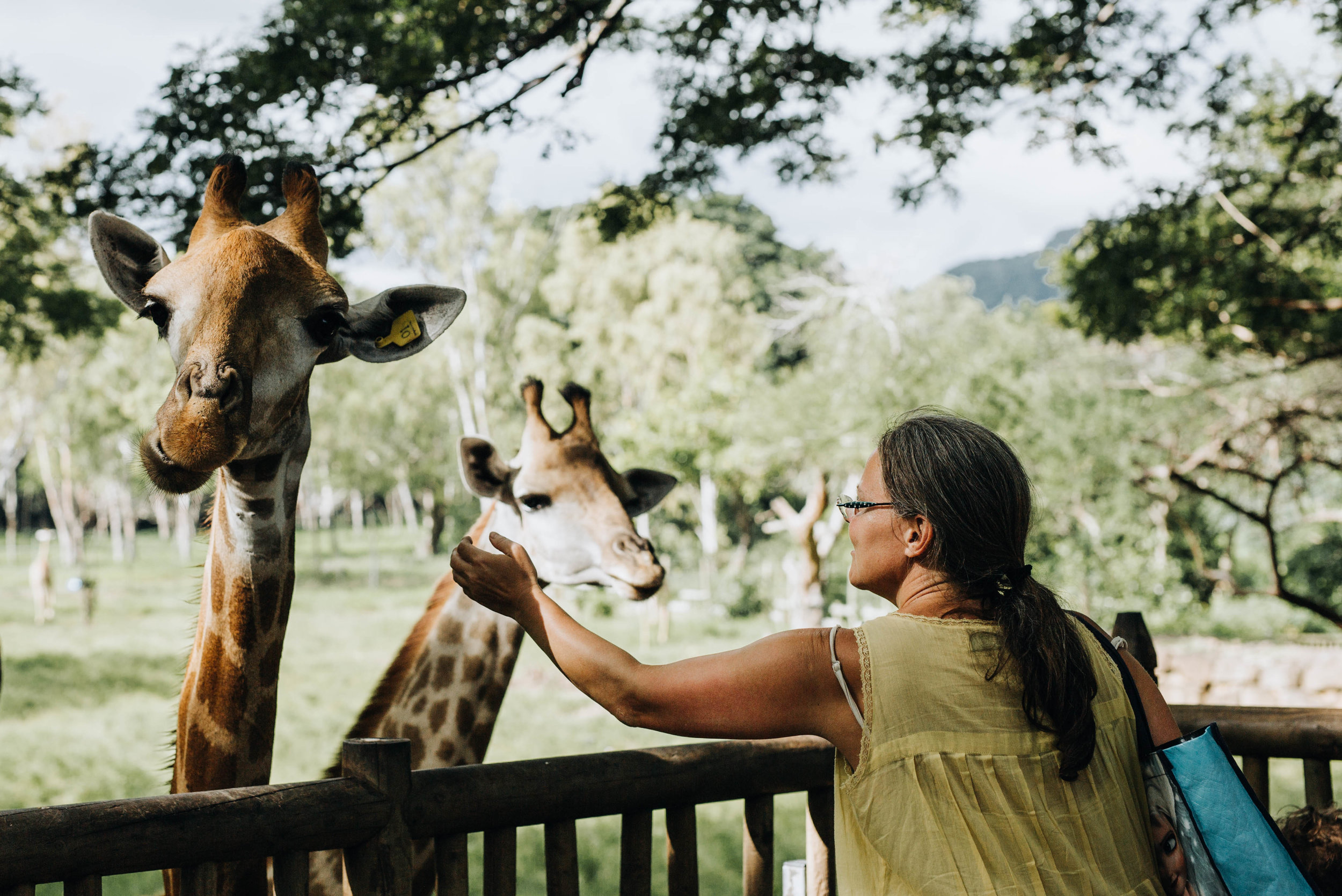 Casela World of Adventures Mauritius Giraffen.jpg