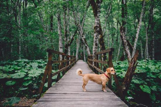 dog trail.jpg