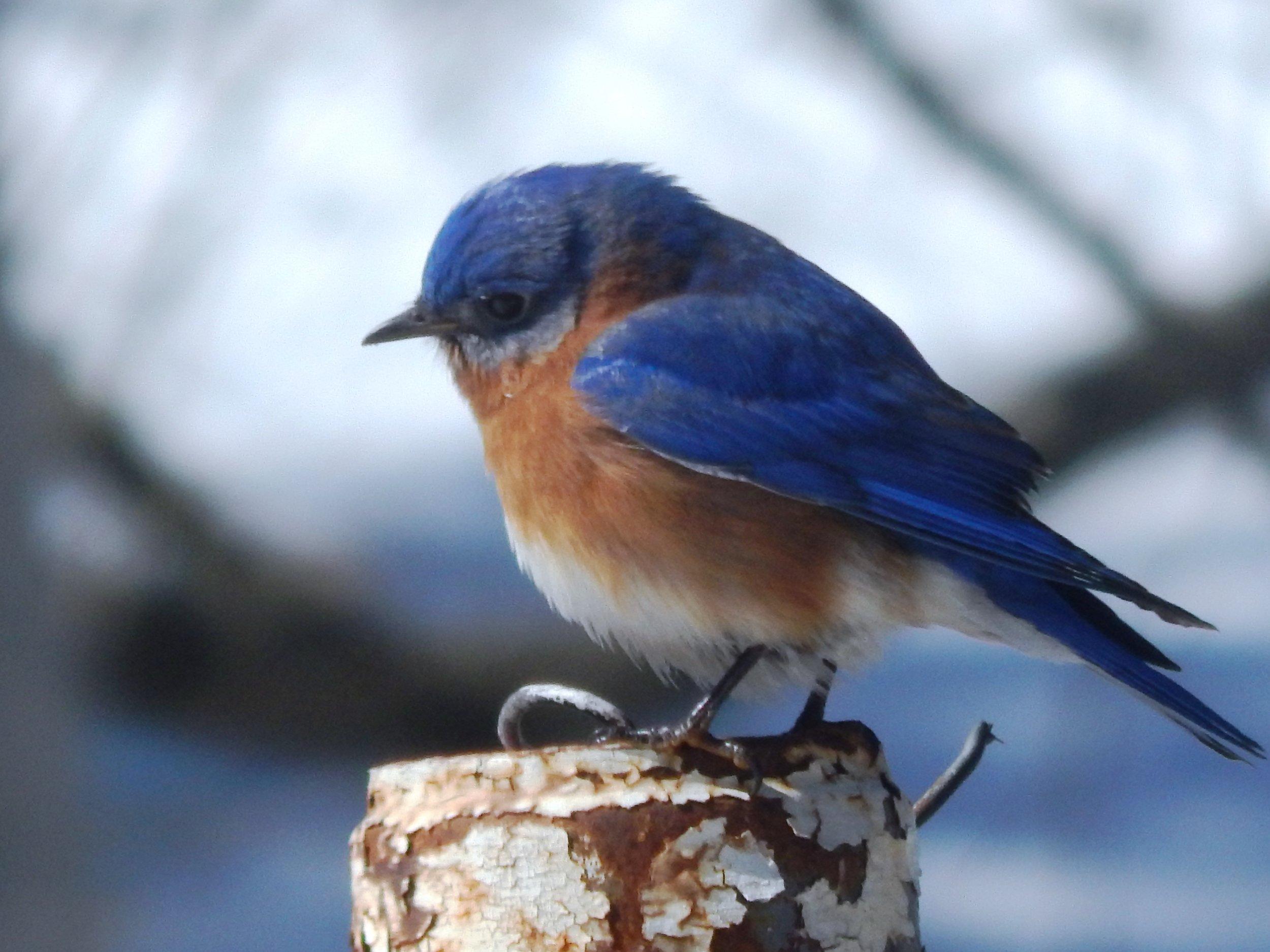 Bluebird.Quote.Top.jpg