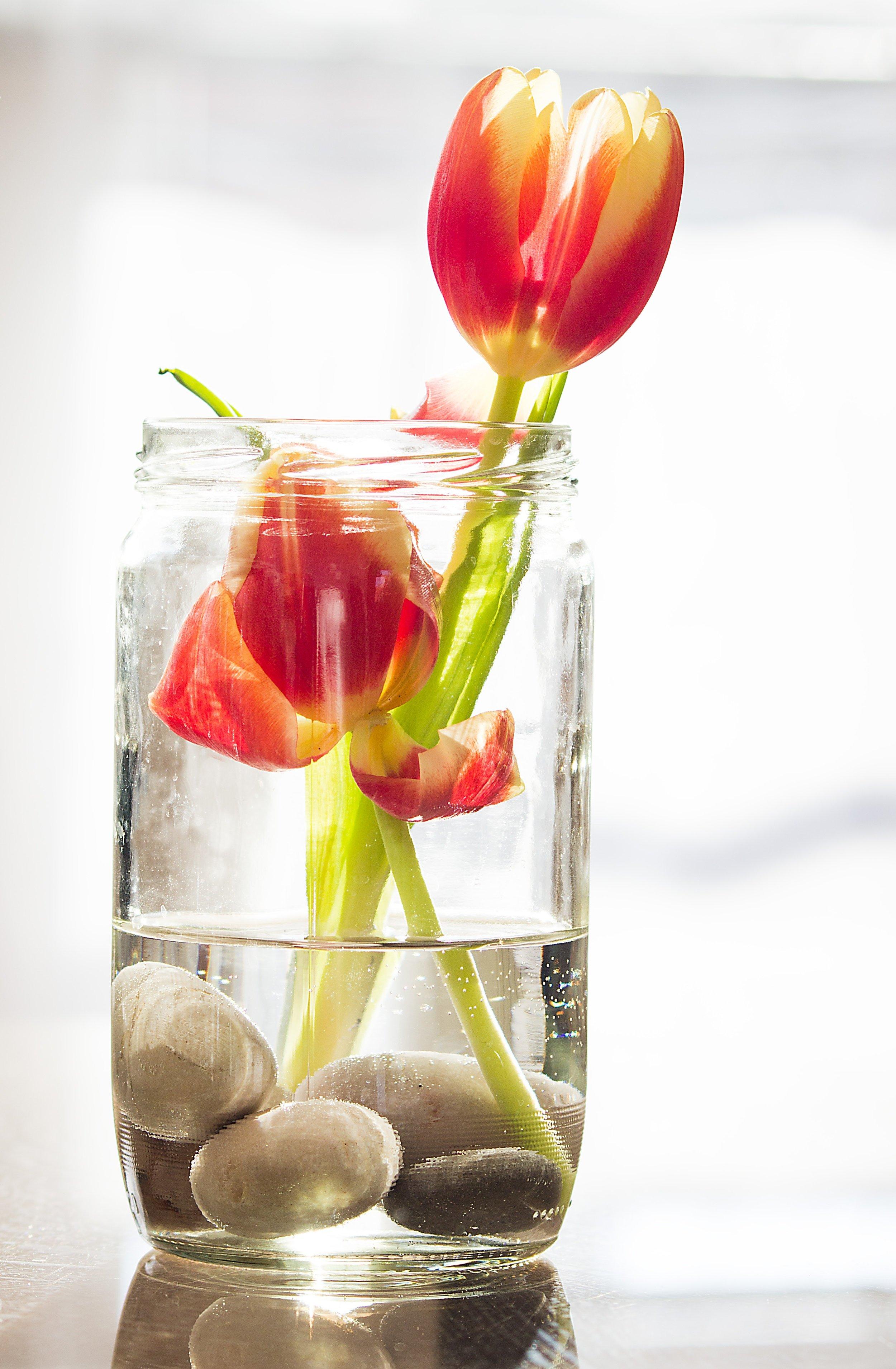 hello spring -