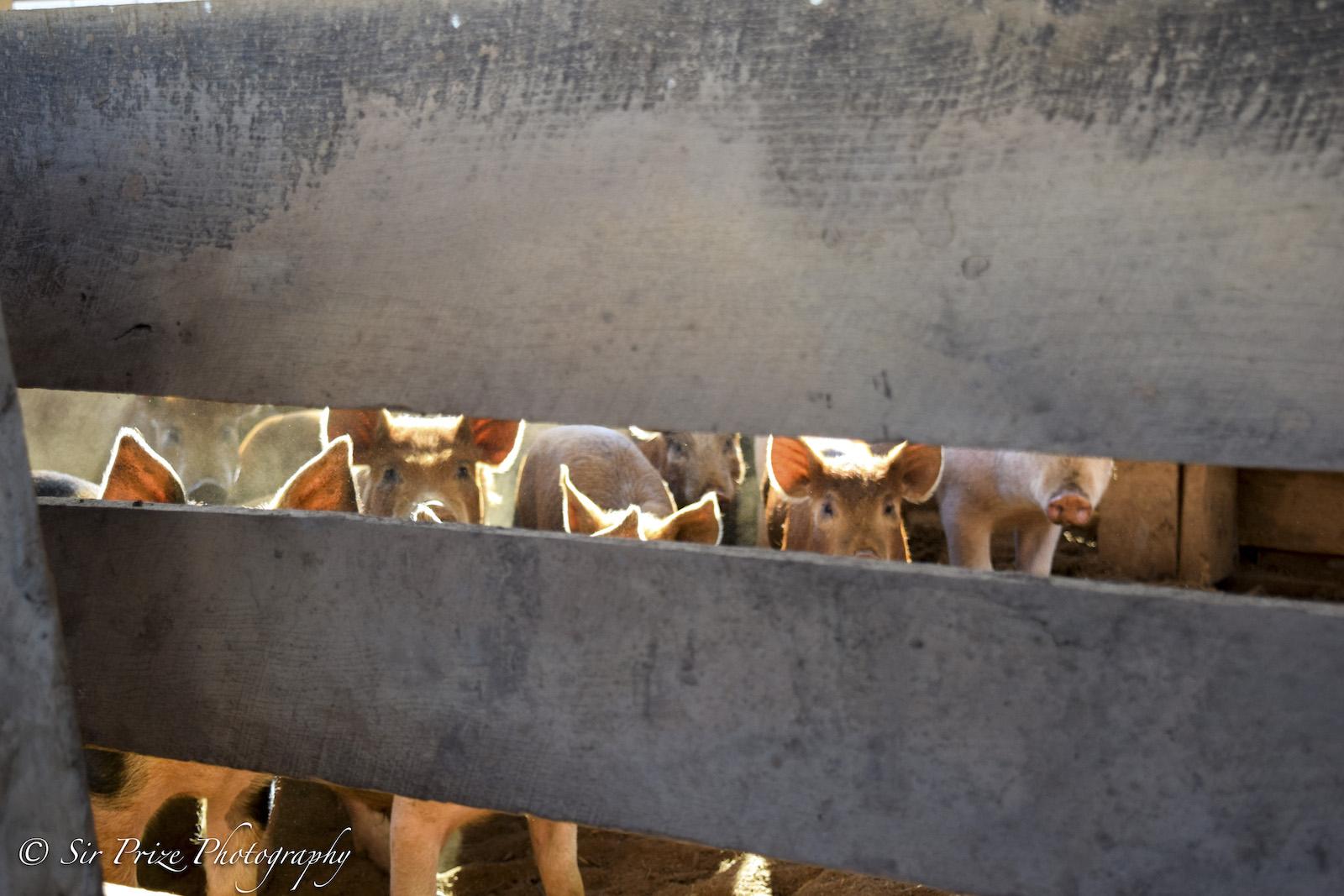 NPhillips_FarmPhotos-19.jpg