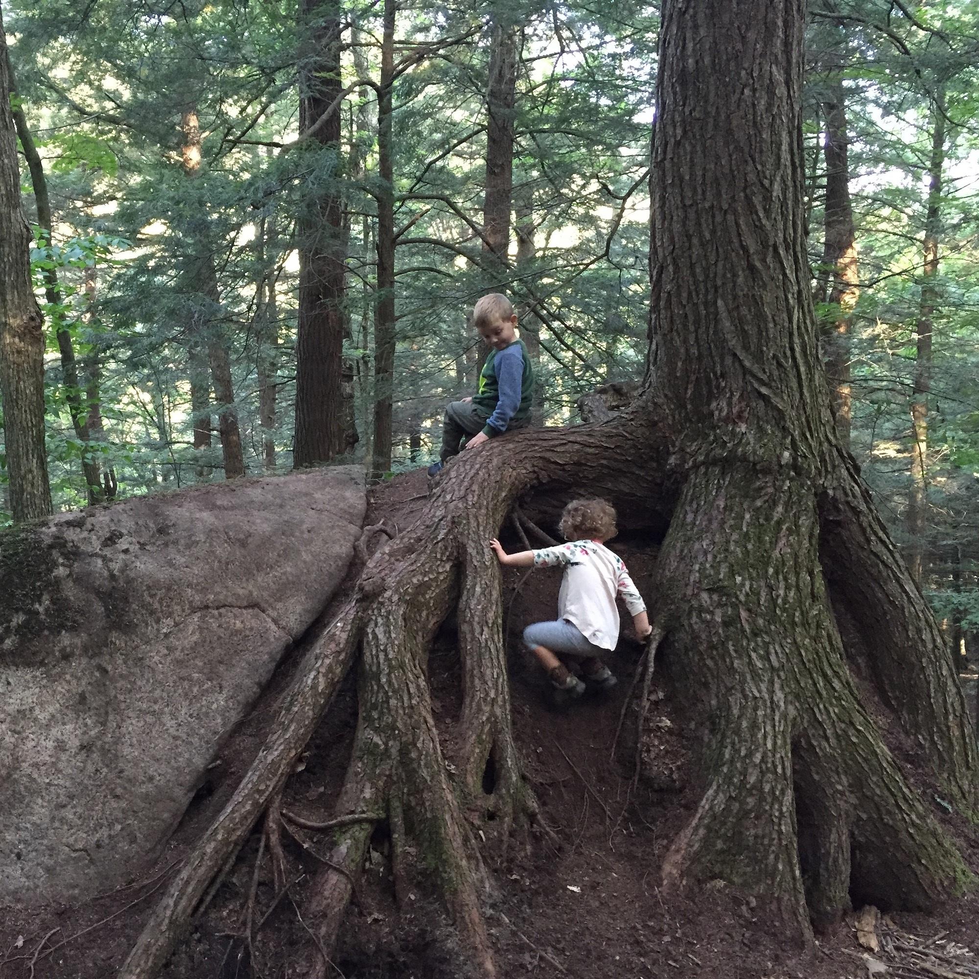 climbingroots.jpg