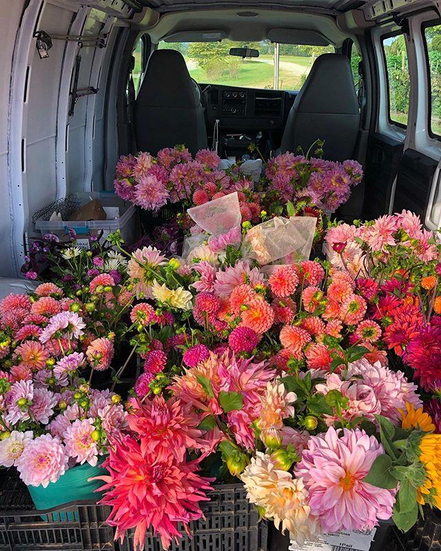 Rollin' out for weekly deliveries, precious cargo!!#rosefieldfarm #dahlias #weddingflowersbouquet#flowerfarmer