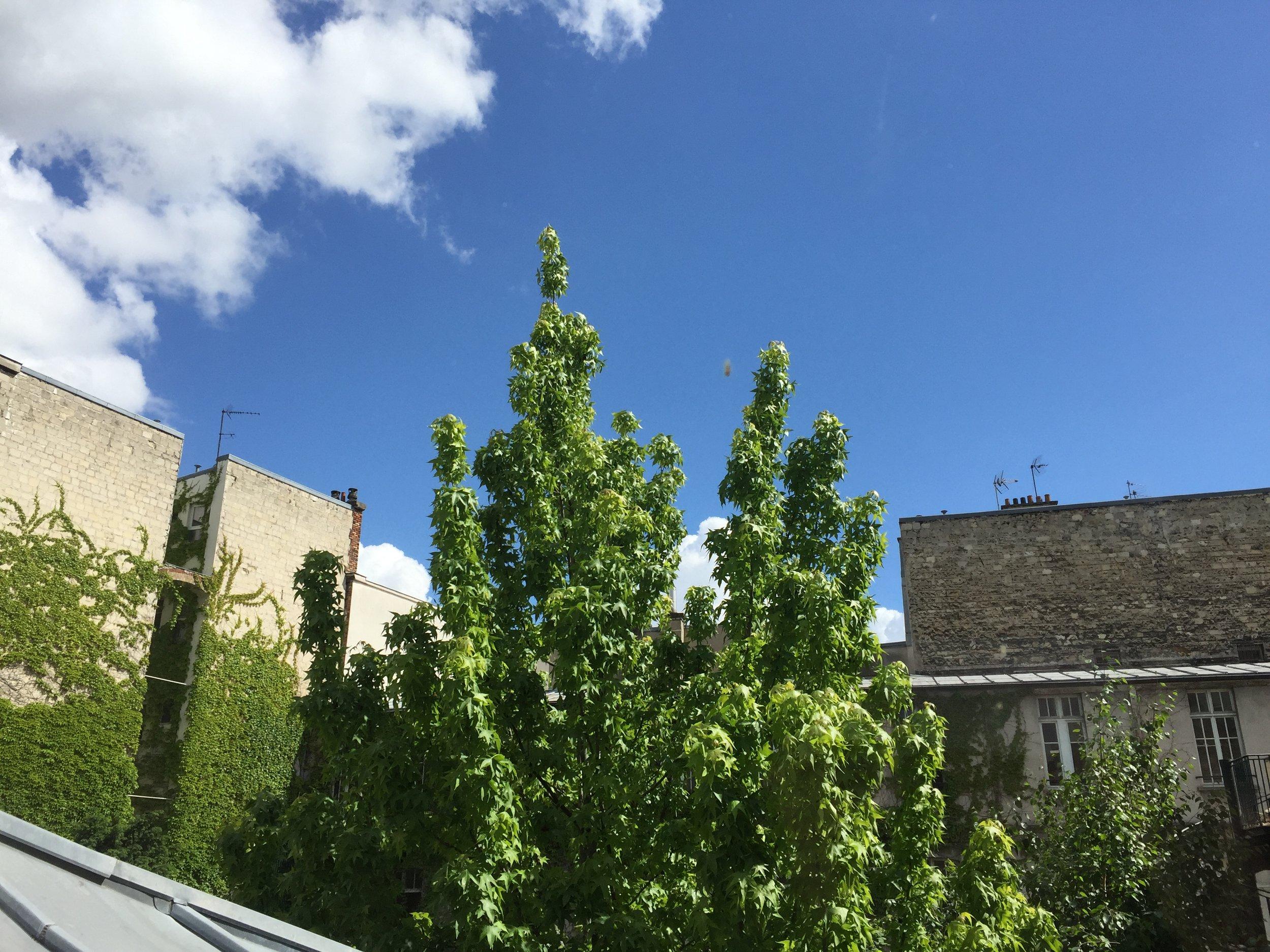 52Clichy-Apartment-backyard.jpg