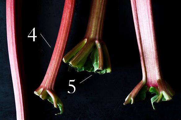 about rhubarb