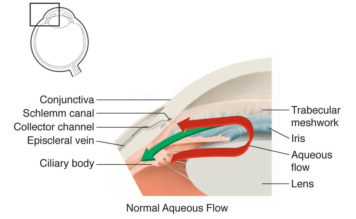 Normal aqueous flow.jpg