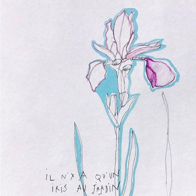 Il n'y a qu'un iris au jardin cette année qui a éclos le 24 juin.