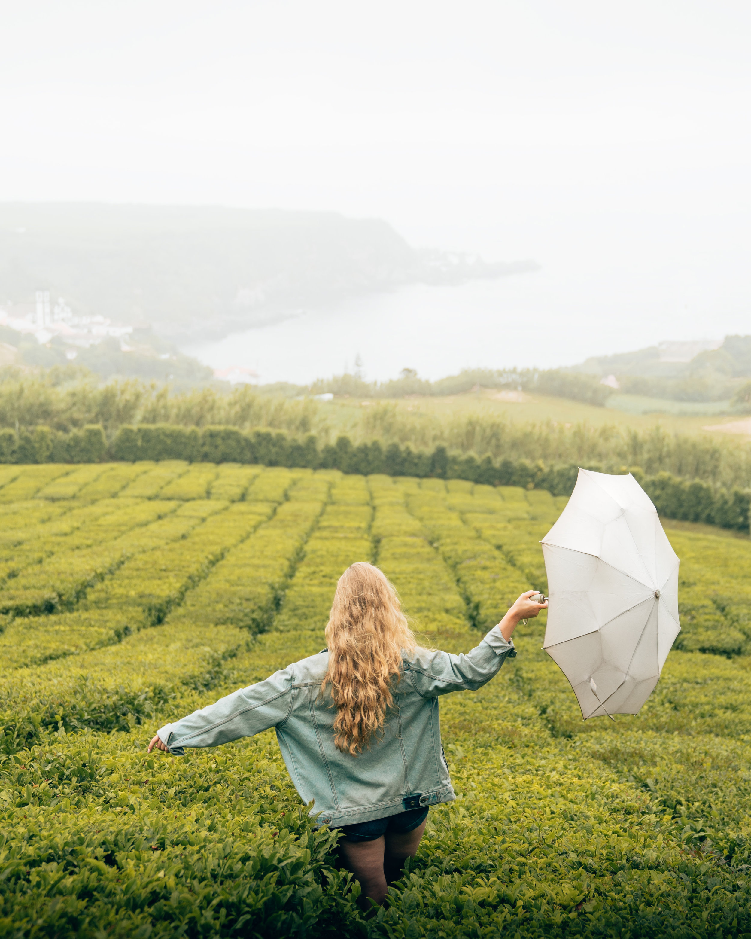 umbrella-5.jpg