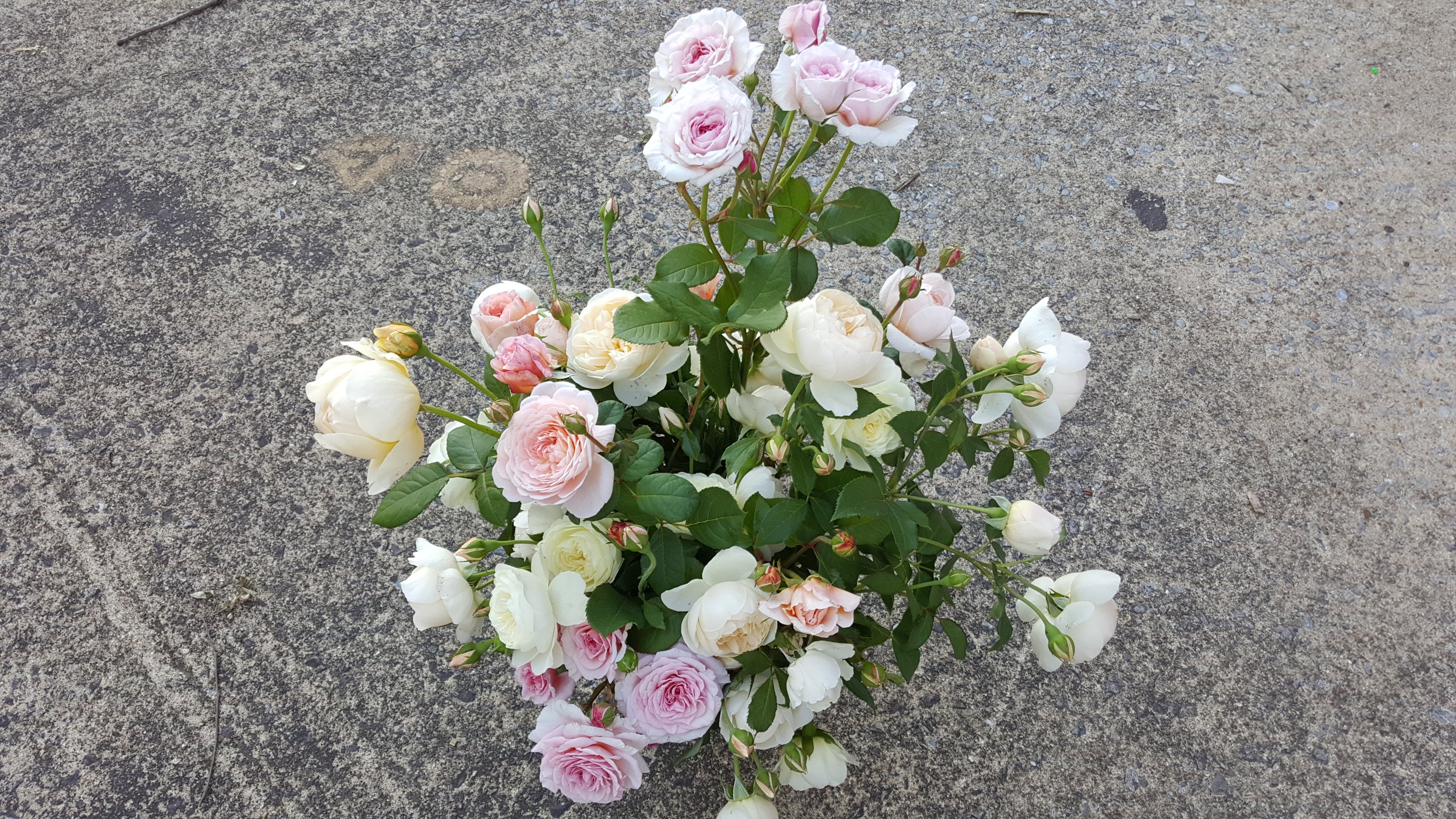 Garden Roses - Even just a few of these beauties will elevate a design!