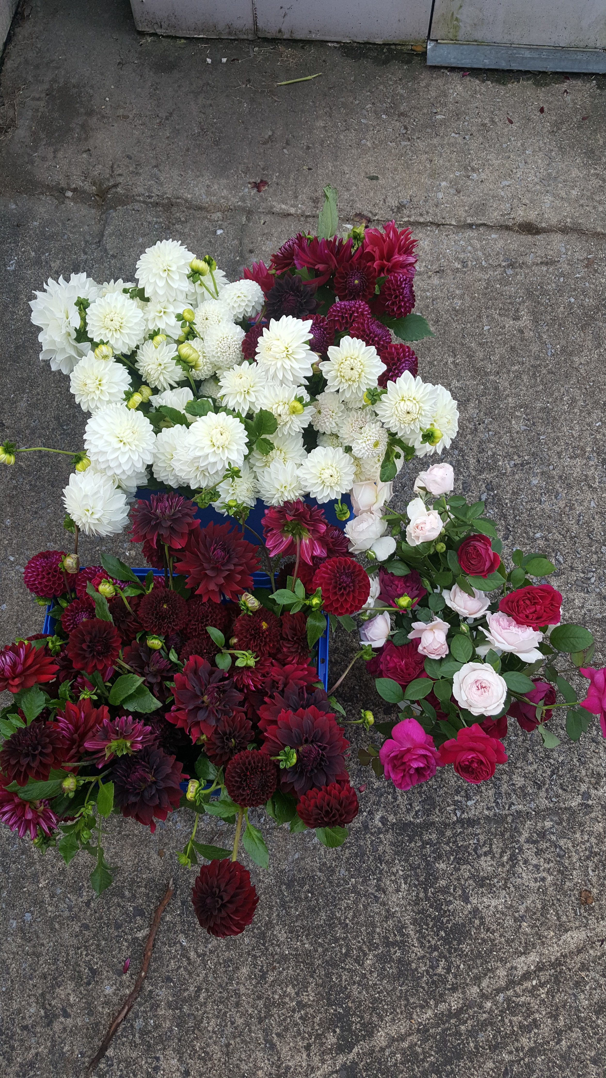 A bulk order for a florist, ready to go out!