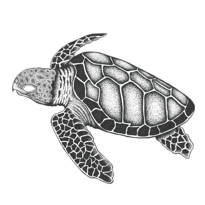 The Hawksbill Sea Turtle Brand By Brand Clothing