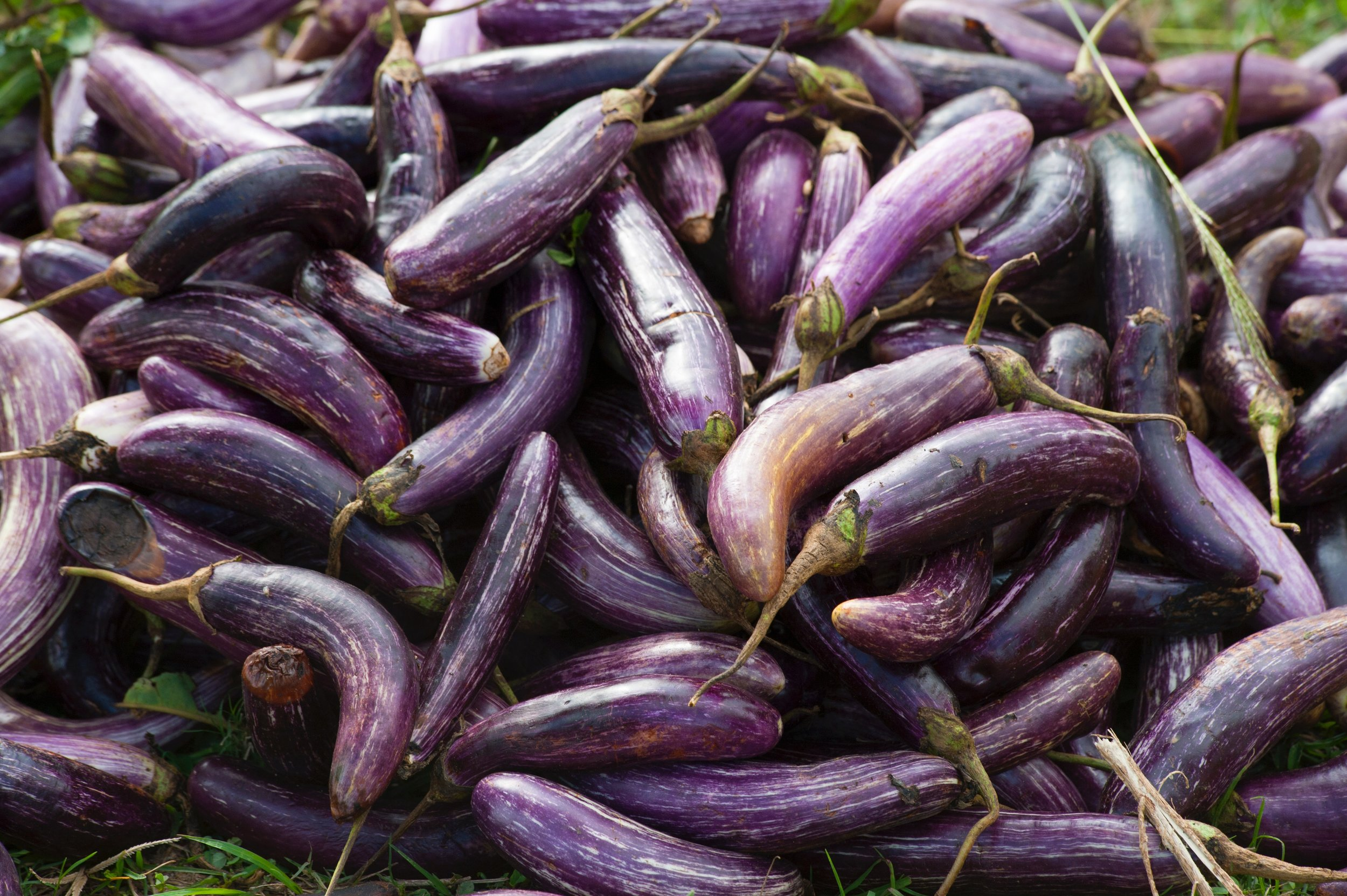 agriculture-aubergine-close-up-321551.jpg