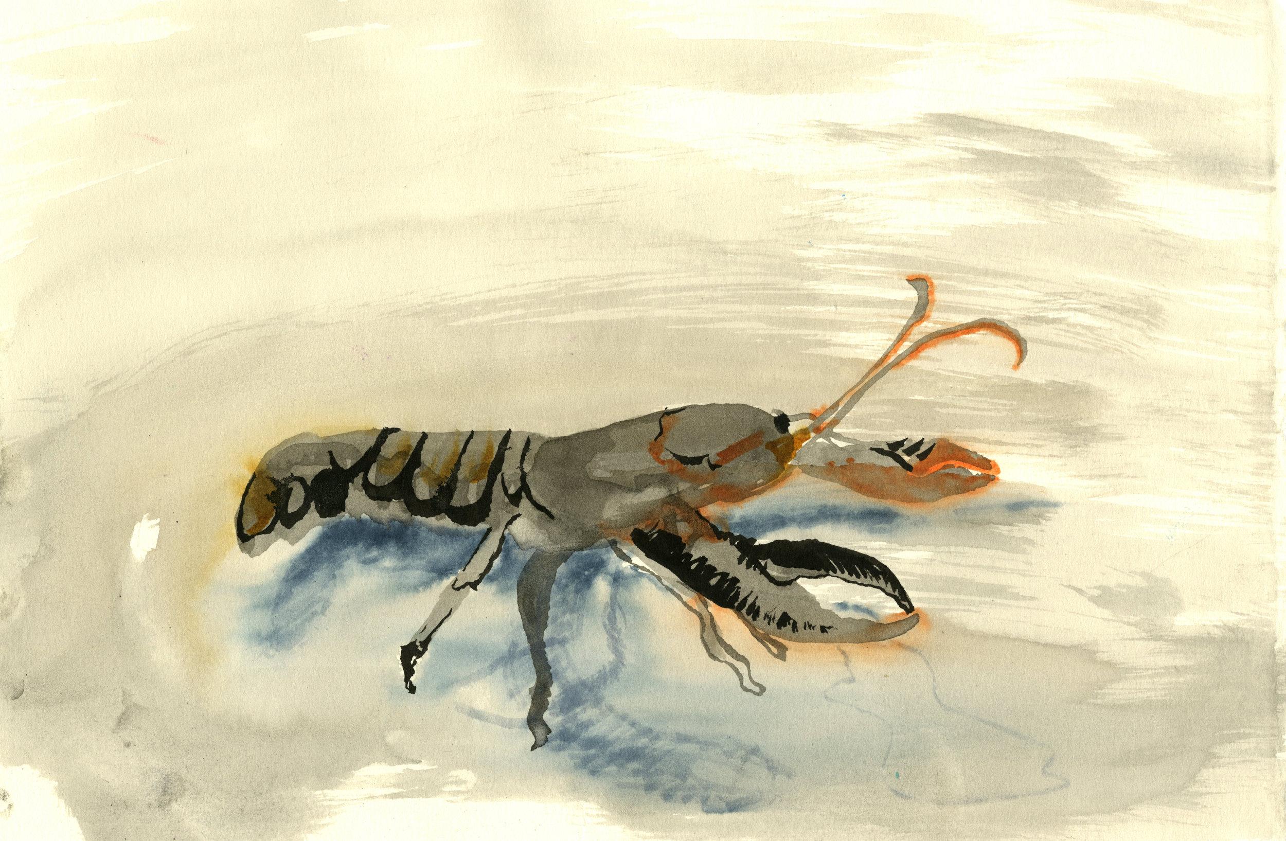 lobster019.jpg
