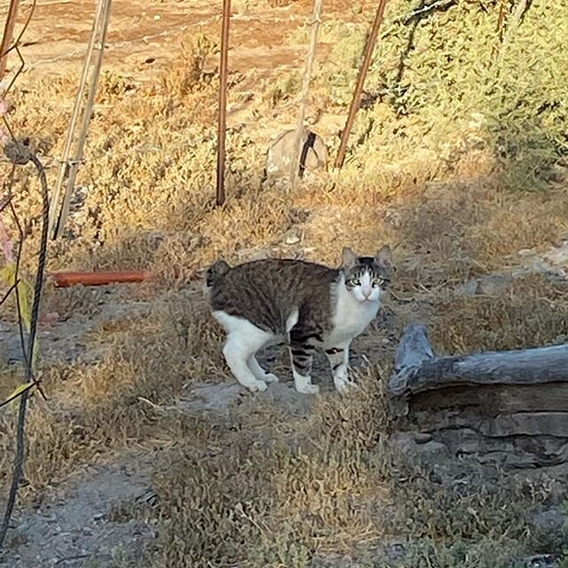 More pictures from out trip to El Patrocinio. Does this cat look like he is half bobcat?