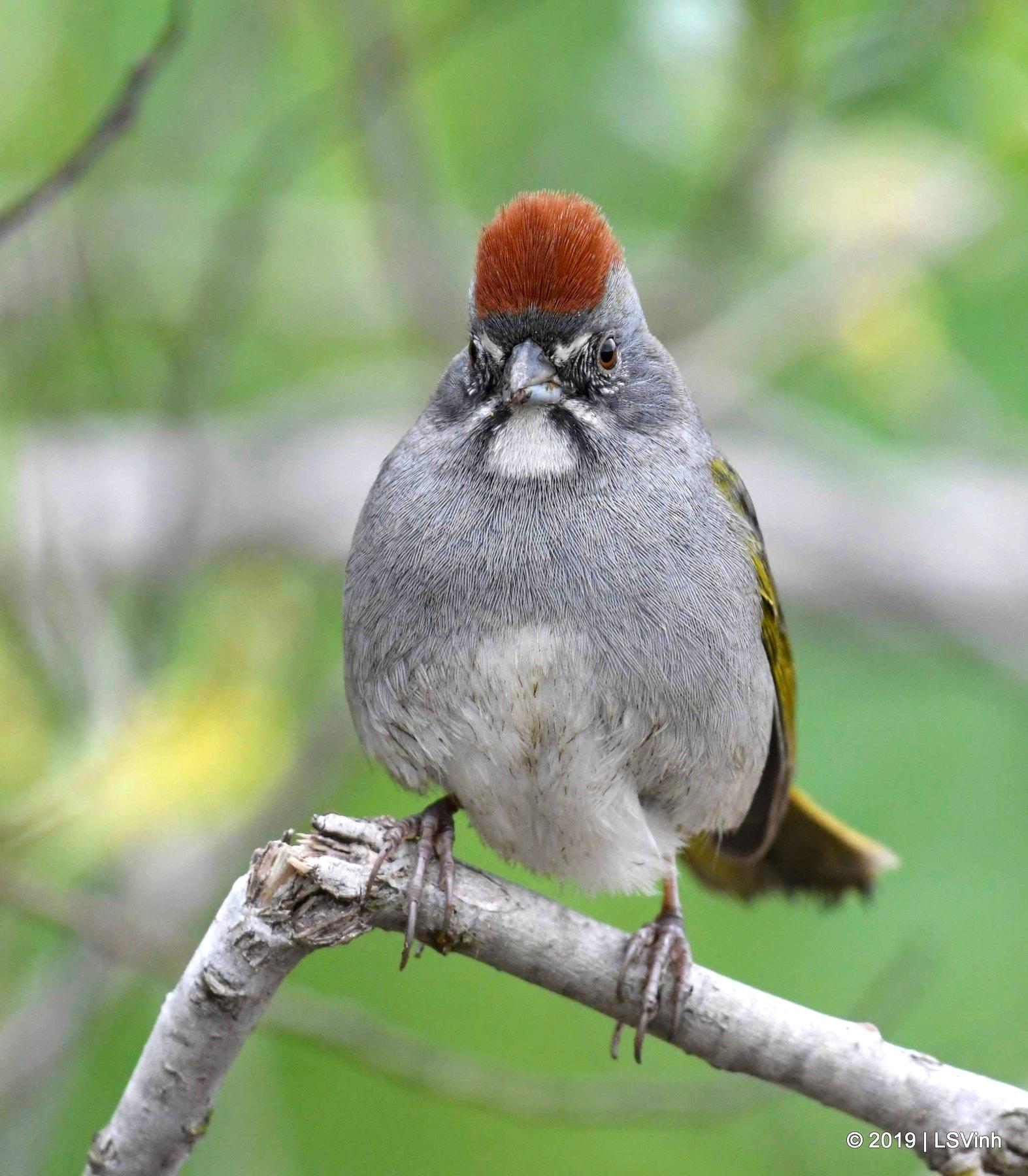 Bird Watching -