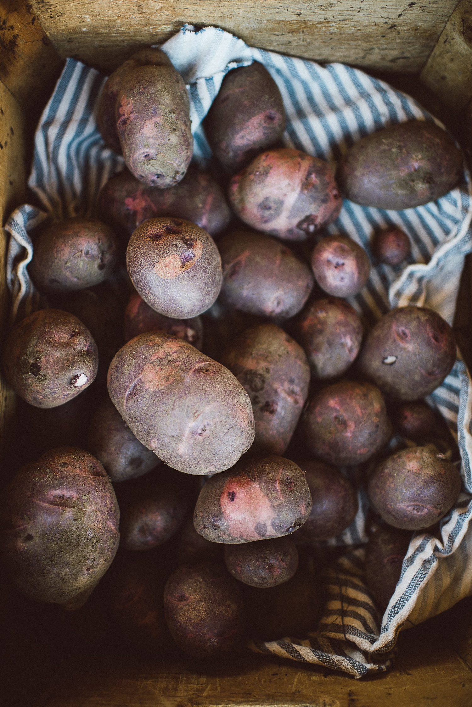 Purple viking potatoes, our favorite all-purpose potato for roasting, mashing, or frying.