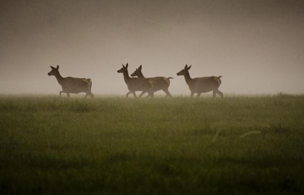 Wild aufspüren -