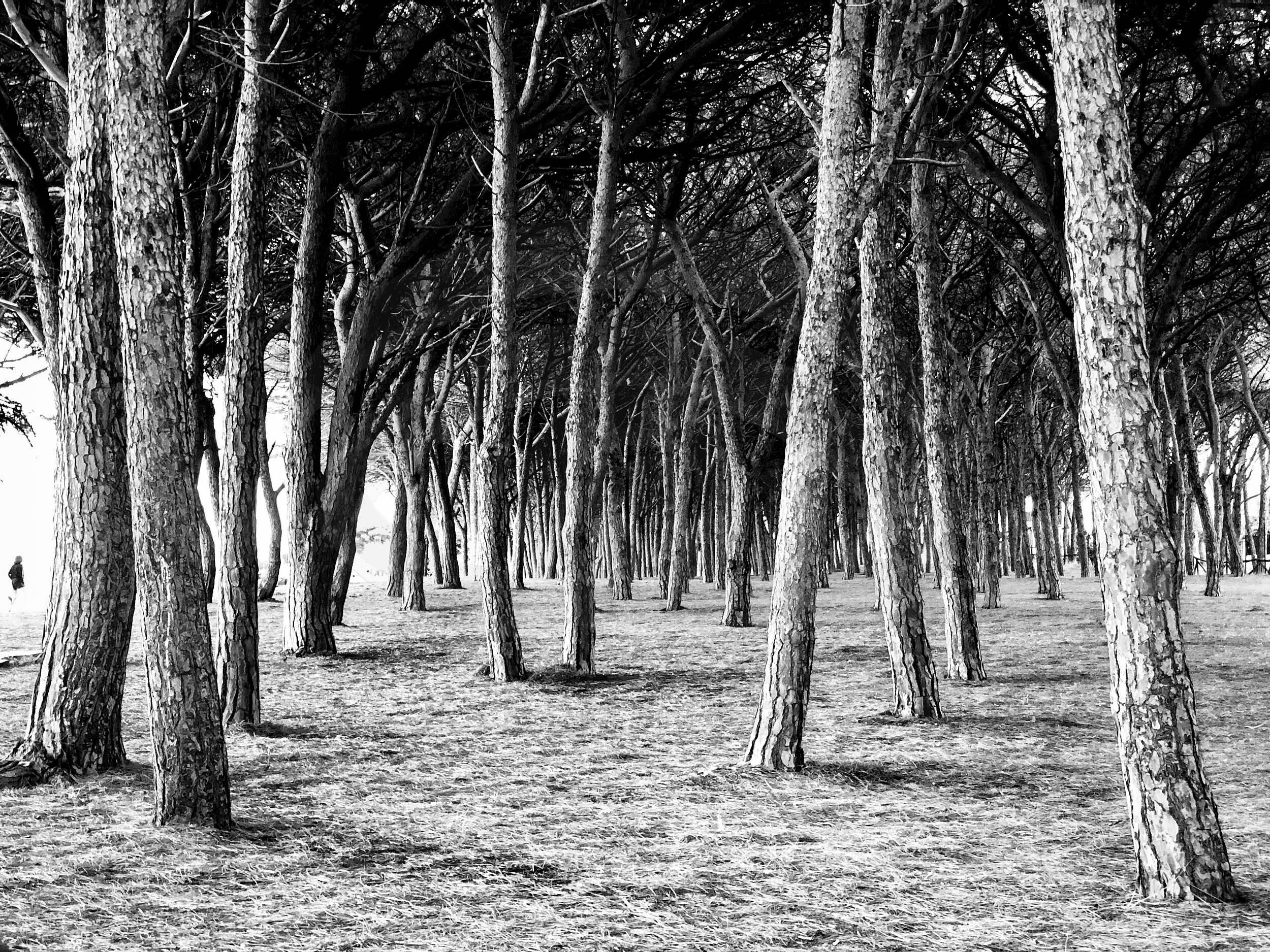 Bäume im Schatten