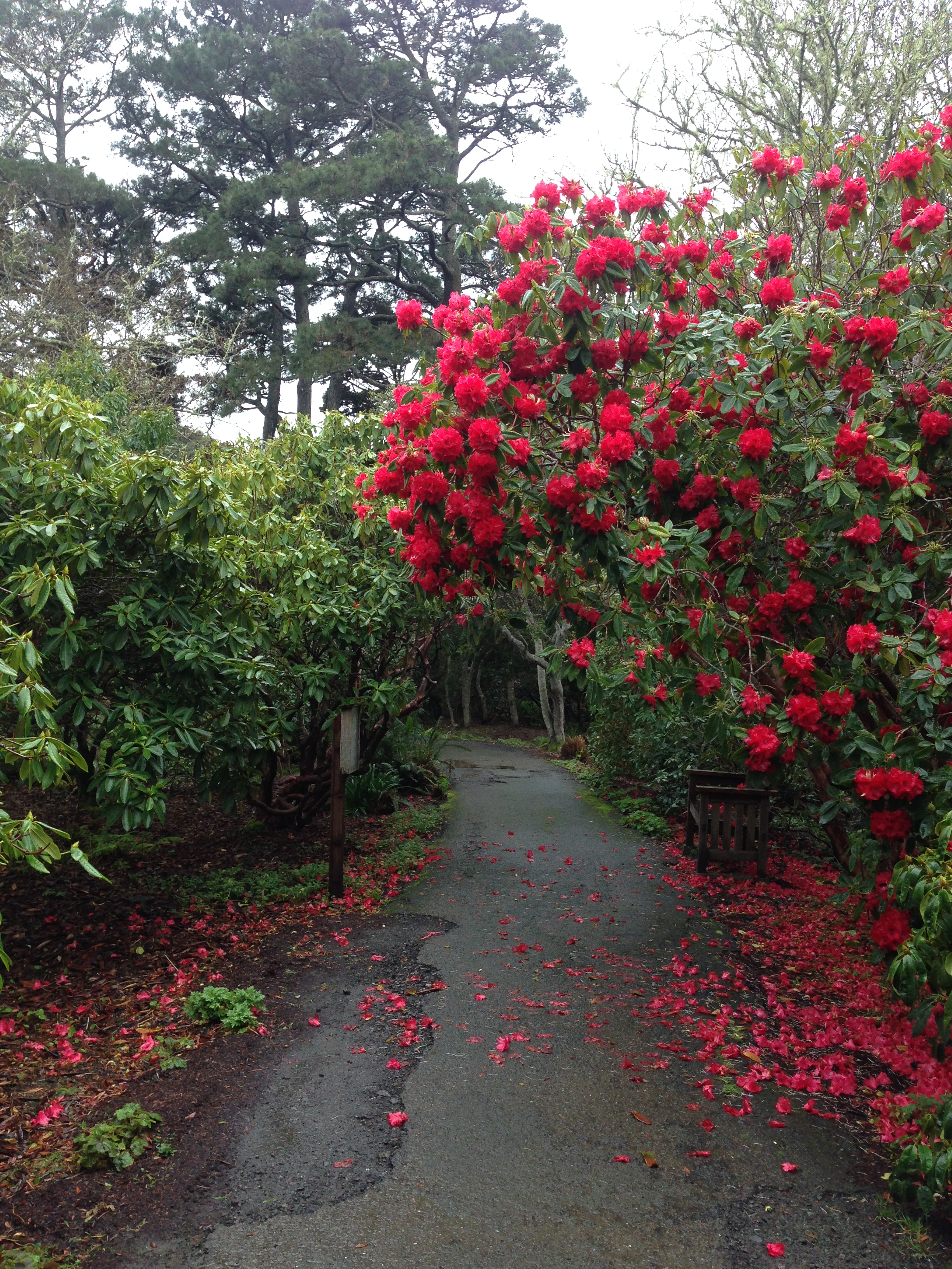 The Mendocino Coast Botanical Gardens are colorful on a rainy day.