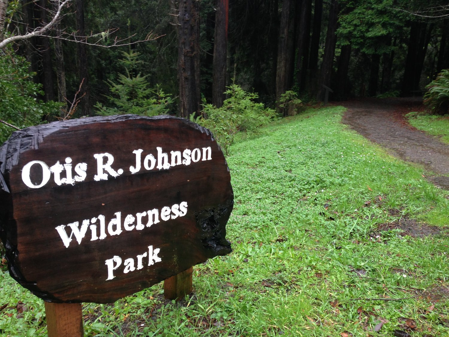 Redwood forest walking distance from downtown Fort Bragg.