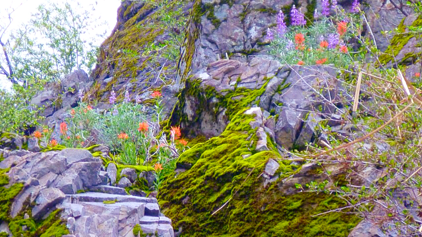 Wildflowers blooming along the Eel River.