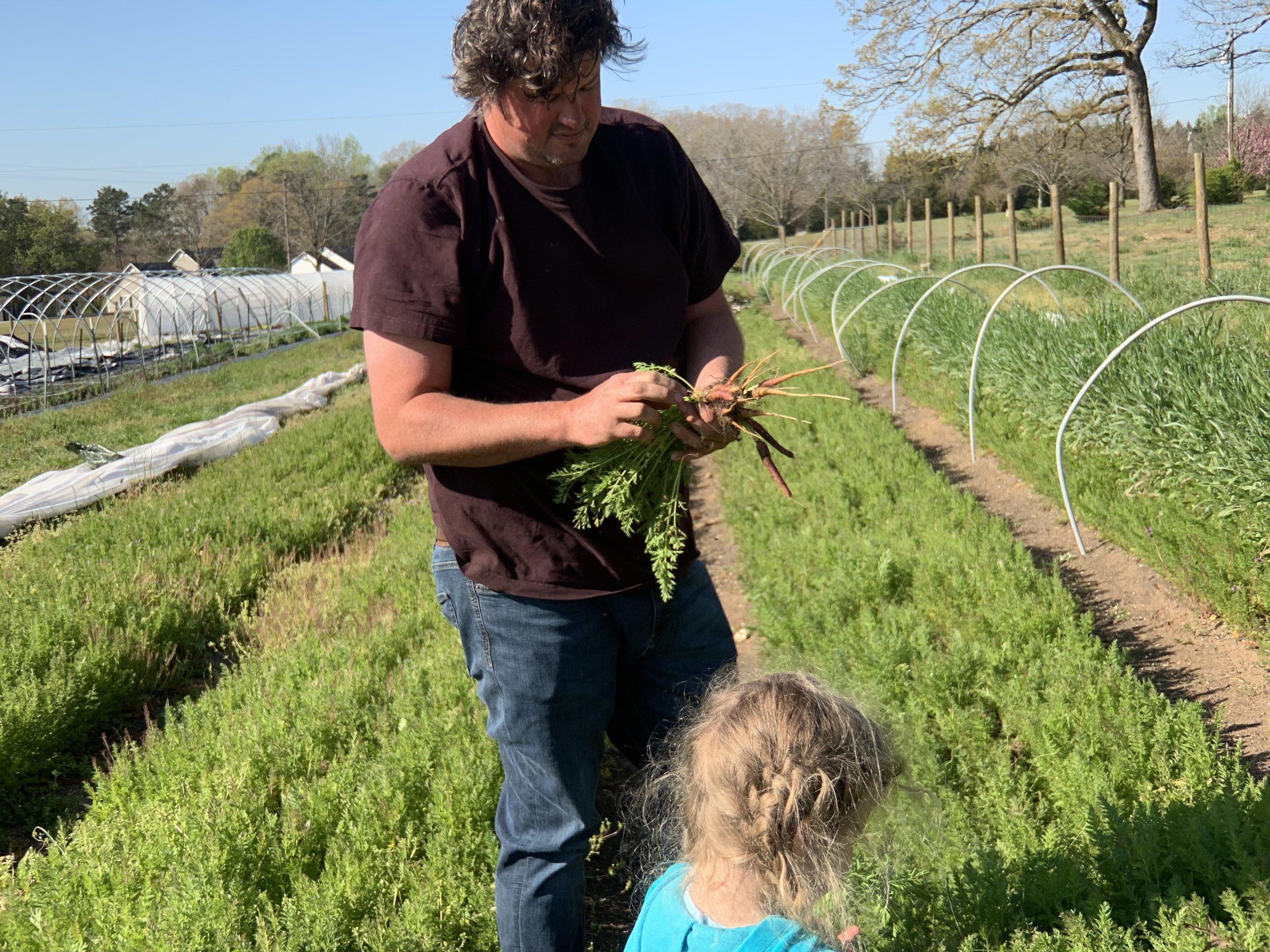 George helps us harvest purple haze carrots