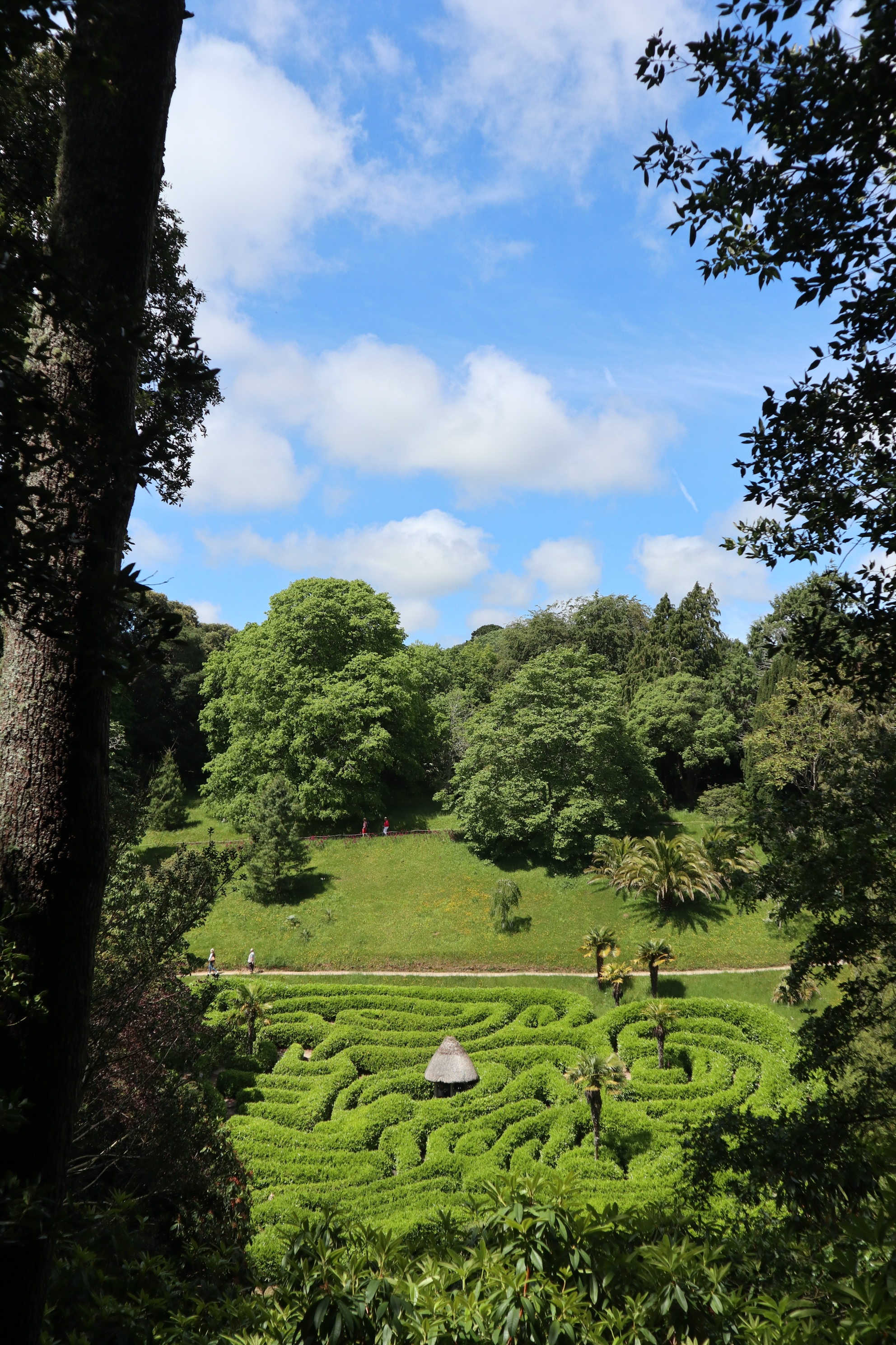 The maze at Glendurgan Garden in Cornwall