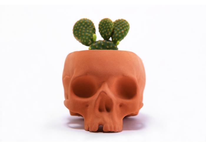 PLANT SKULL terracotta