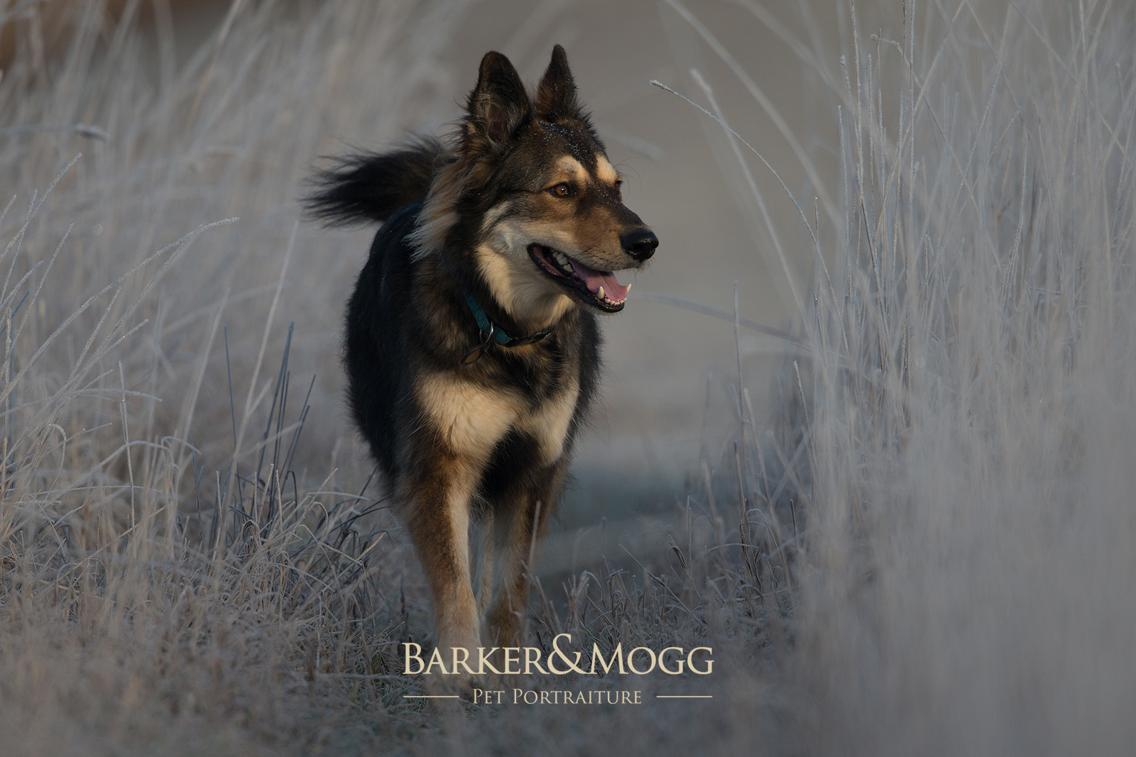 Walkies Session £125 - • We meet at a location, perhaps your favourite walk, or we can suggest a good location near Barker&Mogg HQ in Witney, Oxfordshire. • 1 - 2 hour session.• Ten Professionally edited photographs.• Provided via digital download.*