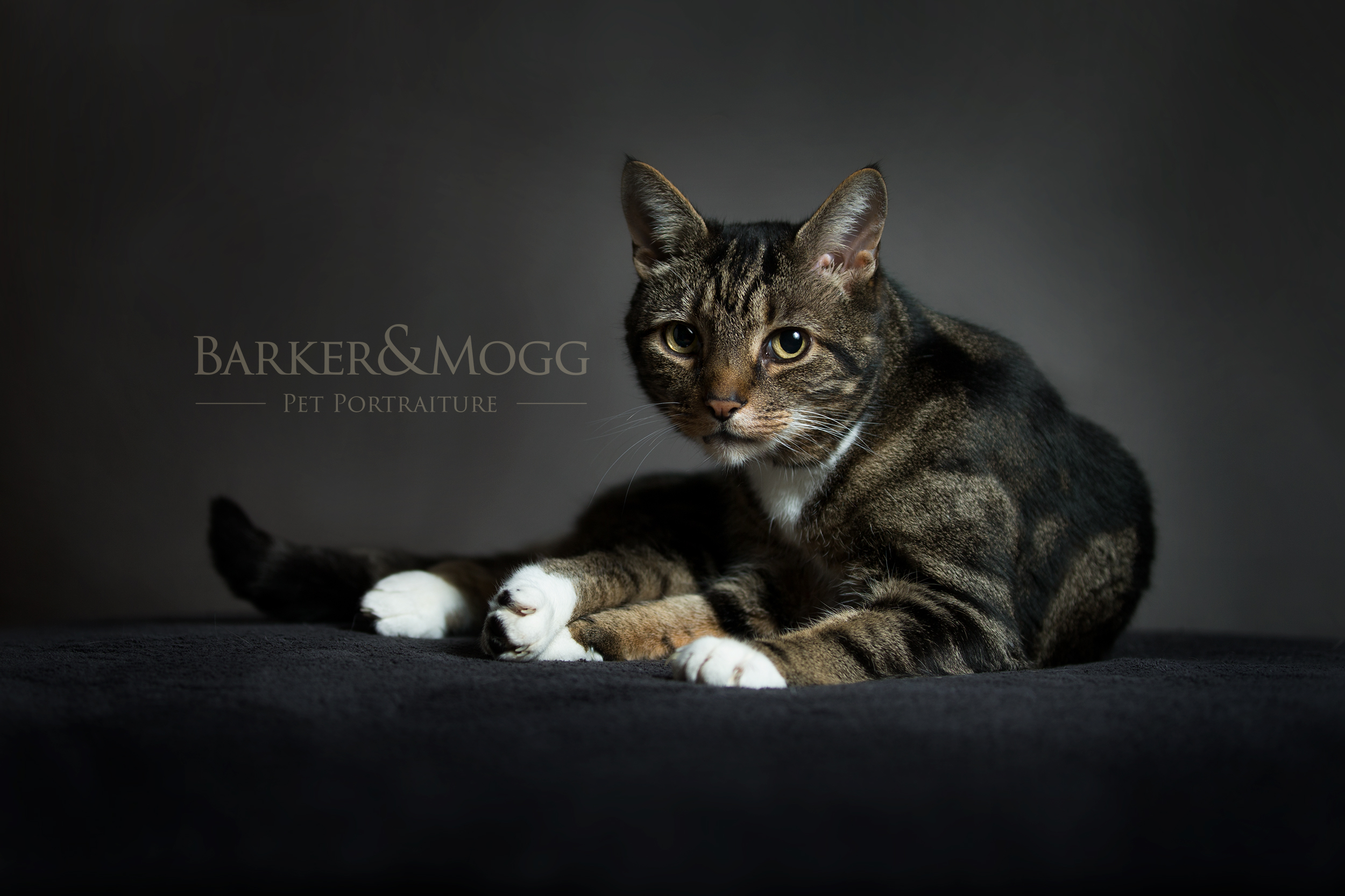 Studio Session £125 - • Barker&Mogg's timeless fine art styled photoshoot.• We come to you with our mobile studio and capture your pet relaxed in the comfort and security of their own home.• 1 - 2 hour session.• Five Professionally edited photographs. • Provided via digital download.*
