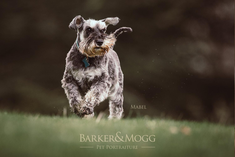 BarkerandMogg_Mabel2.jpg