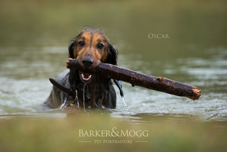 Oscar12_Web.jpg