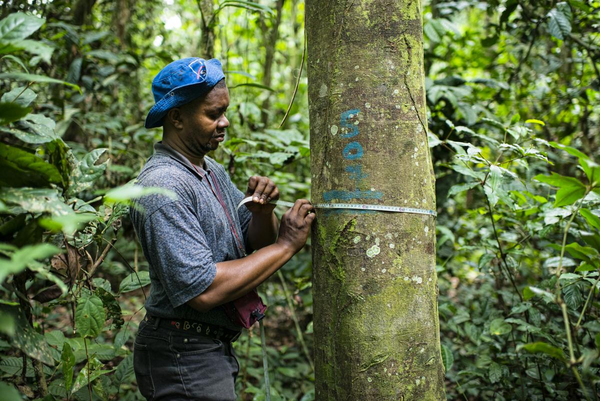 forest landscape restoration, trees, forest