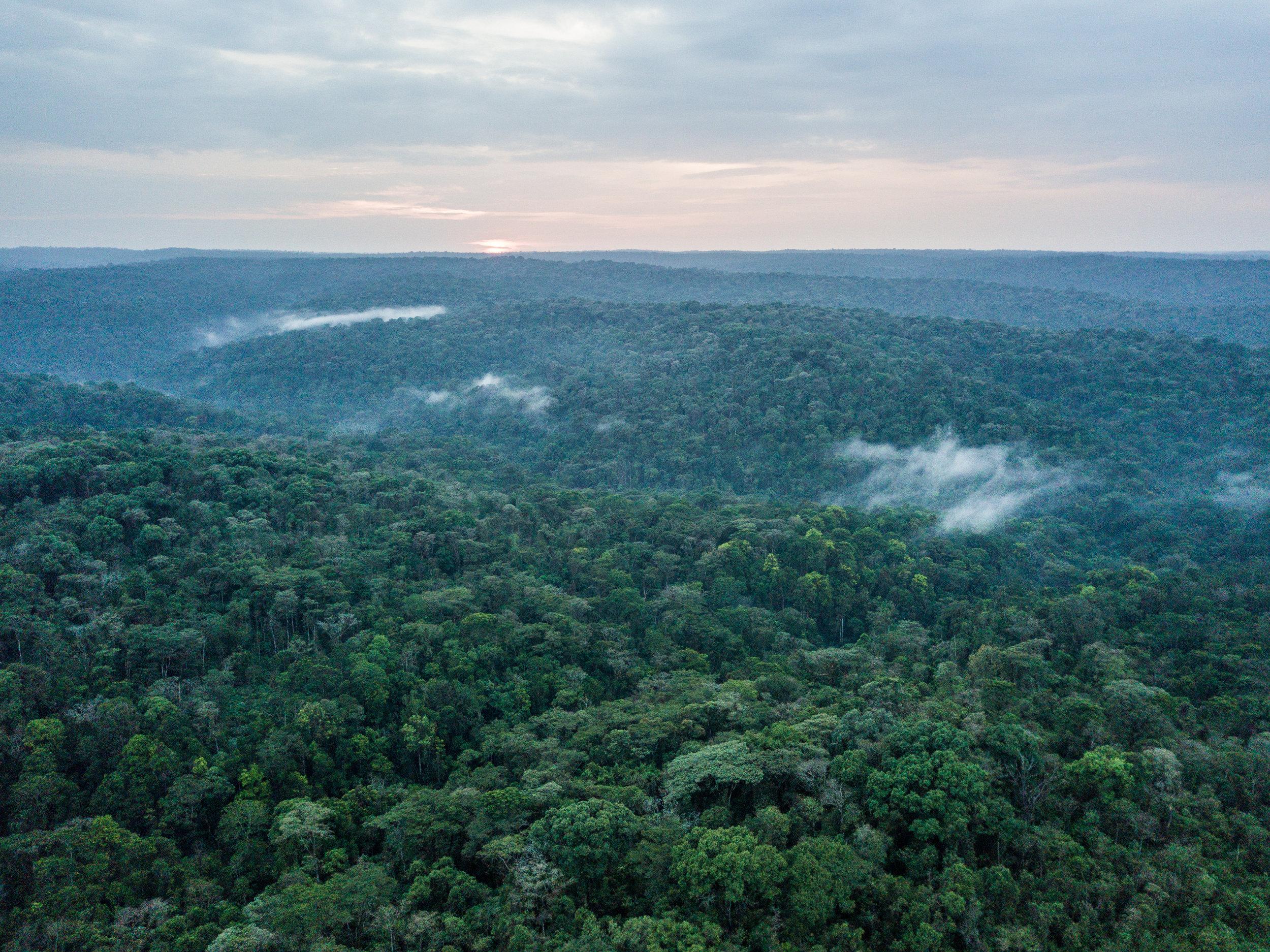mau forest, kenya, forest
