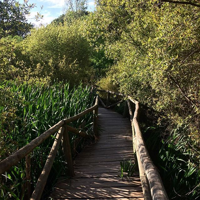 Weekends are for being outdoors. 🌳 • #hiking #senderismo #doñana #doñananationalpark #nature #outdoors #pitkospuut #myhappyplace