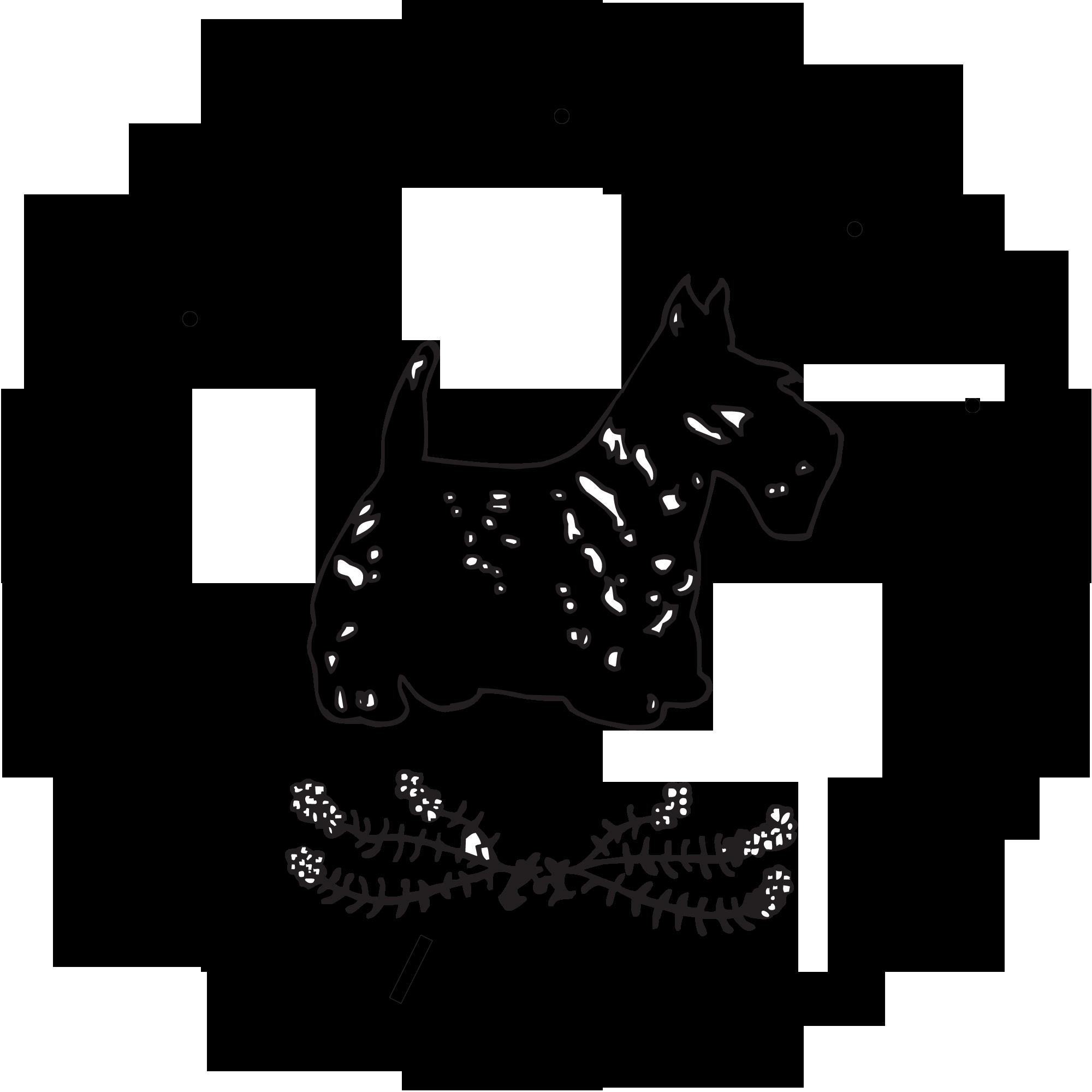 STCA-Logo-High-Quality-fixed.png