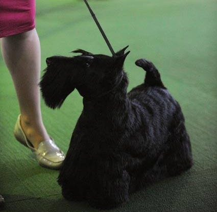 the official breed standard -