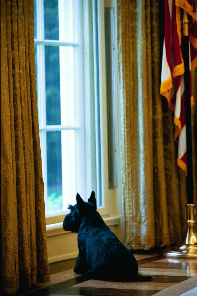 President George W. Bush's Barney in Oval Office. April 30, 2004. Photo by Tina Hager, Courtesy of the George W. Bush Presidential Library & Museum
