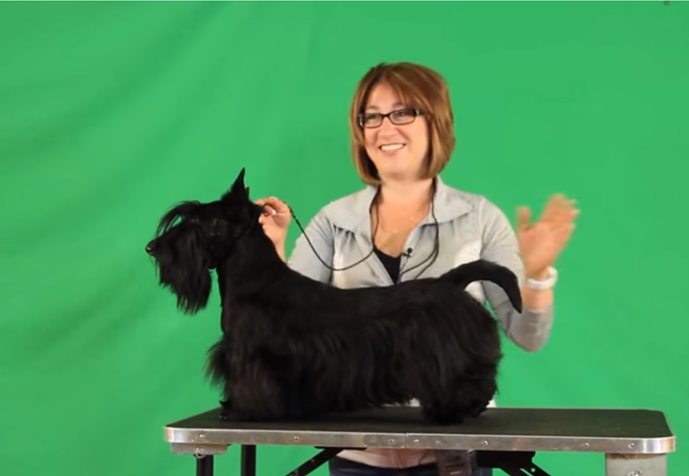 5 STEPS TO STANDING THE SCOTTISH TERRIER DOG with Rebecca Cross