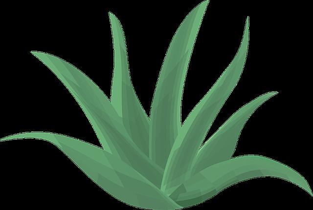 pasha hogan aloe plant.png