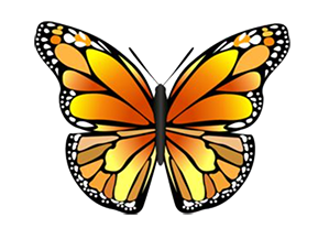 Butterfly_3Yellow_B.png