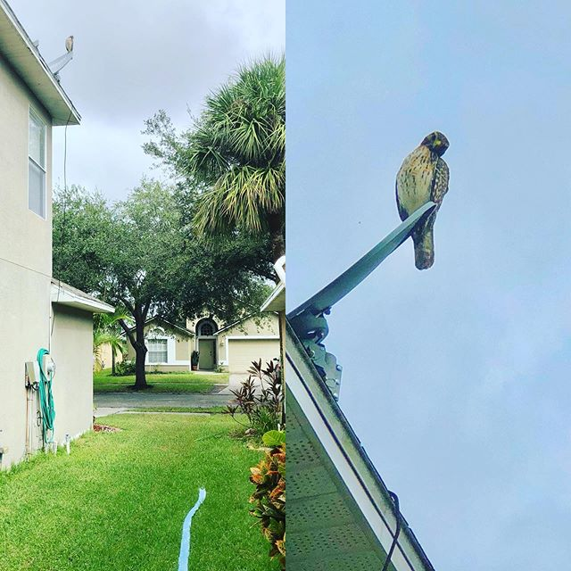 Do you ever feel like you are being watched? . . #neaturewalk #813poolservice #riverviewfl