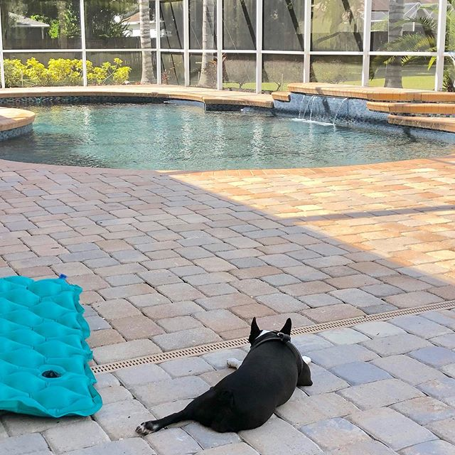 Relax, enjoy your pool! This pup has the right idea and let 813 Pool Service do all the work. #poolservice  #valricoflorida